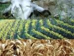 Agricoltura, l'Abruzzo da cenerentola a regina