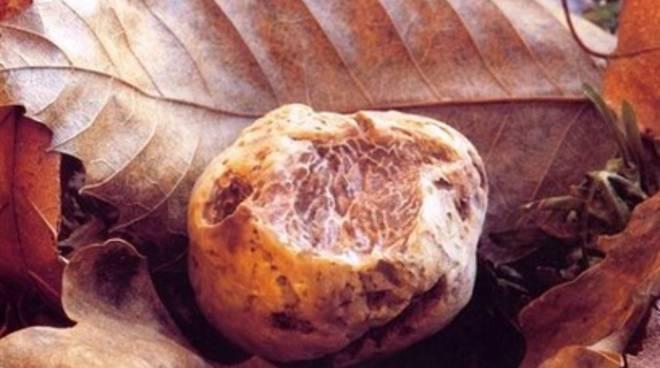 Il brevetto che raddoppia la vita dei tartufi