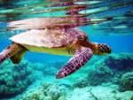 S.O.S. tartarughe, apre il centro di riabilitazione