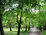 A L'Aquila rifiorisce il verde pubblico