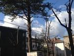 Cittadini preoccupati per gli alberi di piazza Sant'Amico
