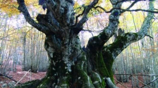 Le faggete della Foresta Umbra Patrimonio Naturale dell'Umanità