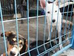 Shelter Quality, l'indicatore del benessere degli animali