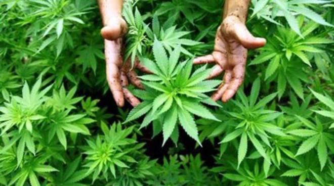 Cannabis terapeutica? Governo dice sì all'Abruzzo