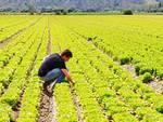 I nomi degli agricoltori on-line