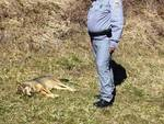 Lupa uccisa a colpi di carabina