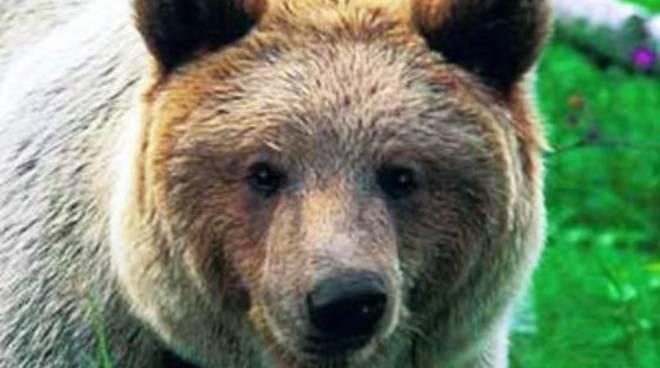 Orsa morta, «Il WWF usi meno demagogia»