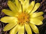 Primavera a L'Aquila: rara pianta rifiorisce