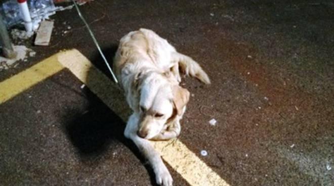 Trovato cane a Bazzano, si cerca il padrone