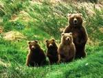 Un mondo senza più orso bruno, ma...