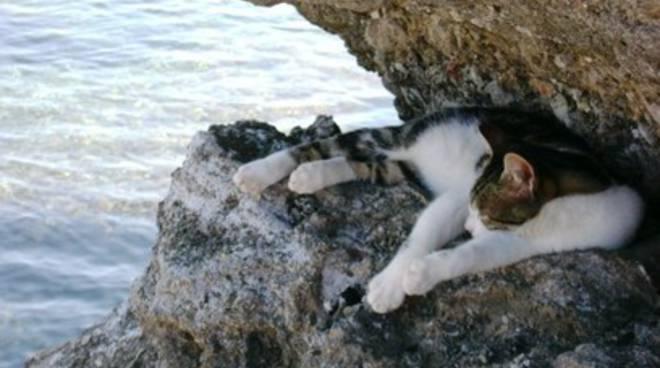 Cani e gatti in spiaggia: è legge in Abruzzo