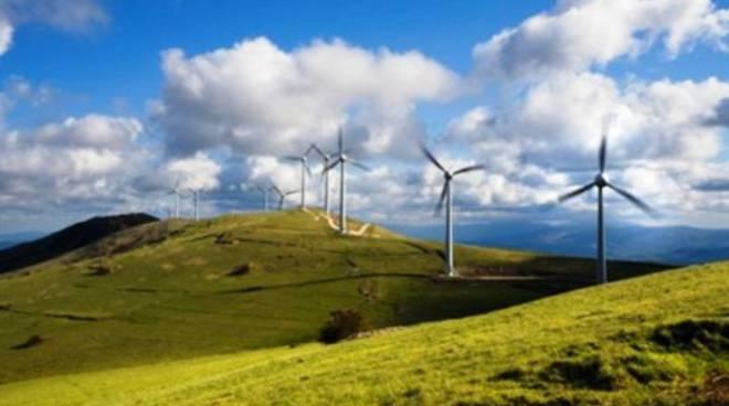 Impianti eolici vietati, ne va della salute dell'orso