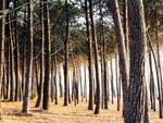 Parco del Castello, pini a rischio sopravvivenza