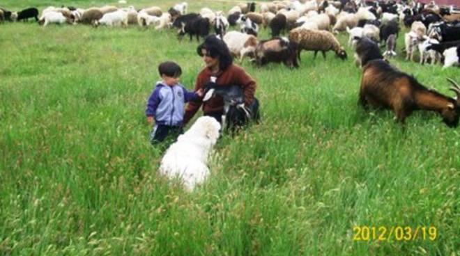Scandalo agnelli per Pasqua, la 'strage' dei pastori