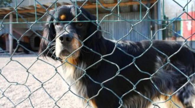 Dog Village in pericolo, avvelenato un cane