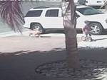Gatto eroe salva bimbo da cane feroce