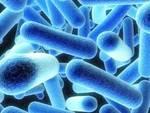 Legionella a Roio, sfoghi e sentenze