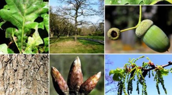 S.O.S. agricoltura, il Parco della Majella alla Fiera