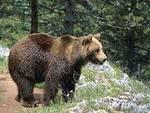 Tutela orso marsicano, la nuova mission dei cacciatori