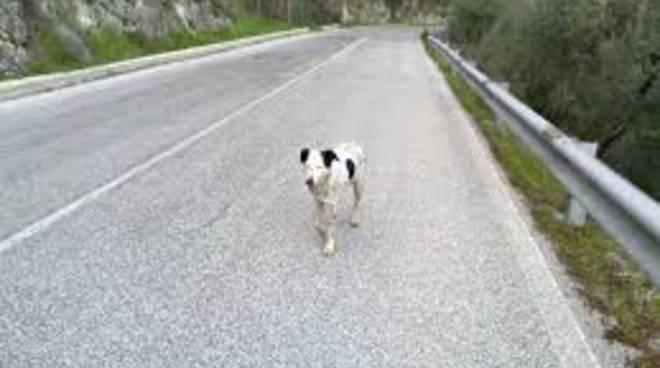 Cani abbandonati in superstrada