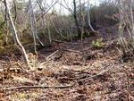 Danno ambientale nel Parco, vicenda si infittisce