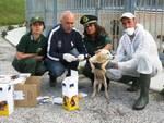 Oltre 300 collari antiparassitari per i cani della Marsica