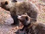 Parco, tre giovani diventano 'avvocati dell'orso'
