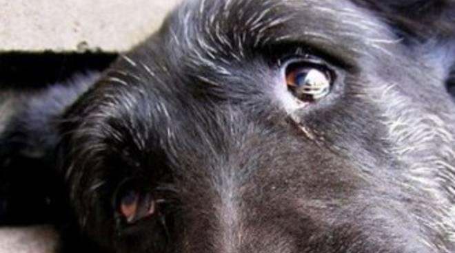Cane legato e abbandonato, salvato per un soffio