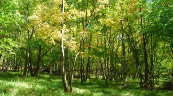 Dispersi sui boschi della Majella