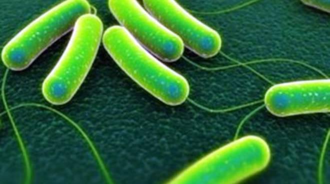 Emergenza salmonella, summit in Comune