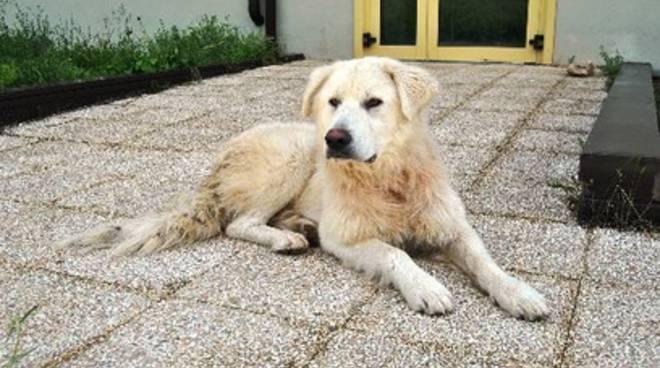 Il giallo del cane scomparso, un avvistamento