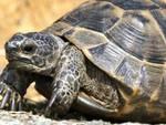 Tartaruga a spasso in superstrada