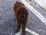 Civitella Roveto, storia vagabonda del cane girovago