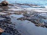 Rimosso inquinamento oleoso sulla costa abruzzese