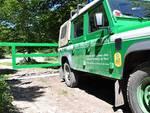 S.O.S. Orso marsicano: Forestale in soccorso