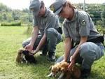 Stanato commercio illegale di cuccioli