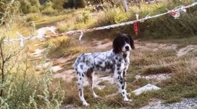 Trovato cane sulla Mausonia, si cerca il padrone
