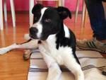Il cane di Scoppito ha ritrovato il suo padrone