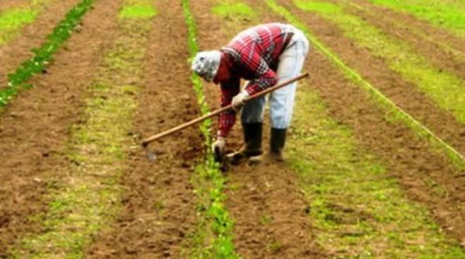 Malattie in agricoltura, indagine conoscitiva Asl L'Aquila