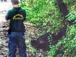 Orso morto, Brambilla: «Galletti esca dal letargo»