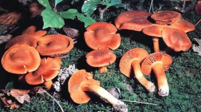 Protezione contro i funghi nella Marsica, Asl 1 paladina