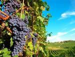 Protezione indicazioni geografiche tipiche, l'Abruzzo che conta