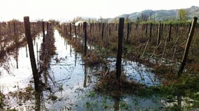 Allarme agricoltura, pioggia 'annega' vino e olio