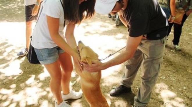 Cani al Rifugio Comunale, le nuove regole di Cialente