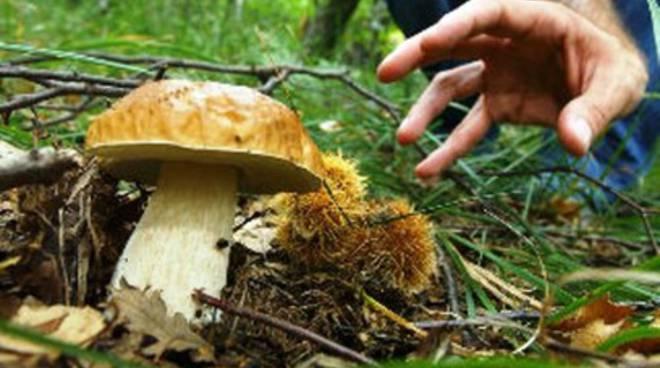 Cercatore di funghi cade in un burrone