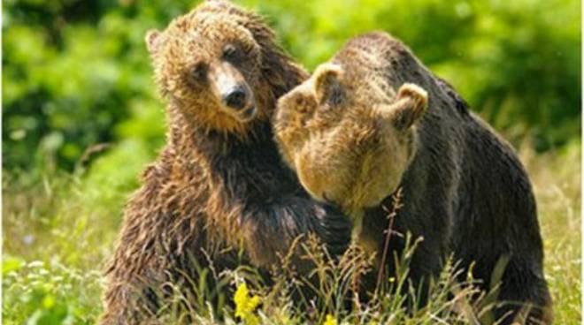Trova due orsi nella stalla e scrive al Prefetto