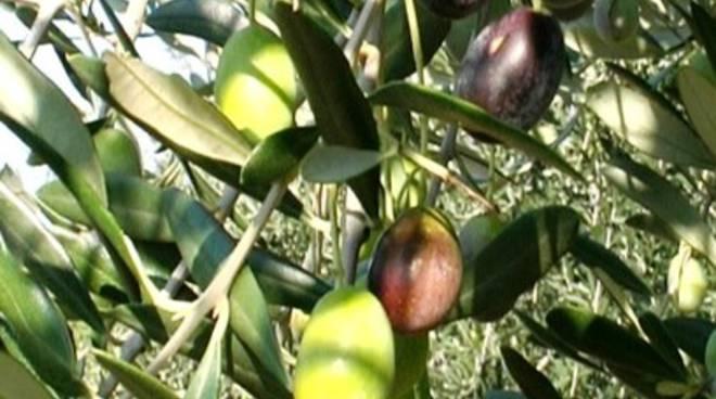 Un ulivo nel giardino per ricordare Neyda
