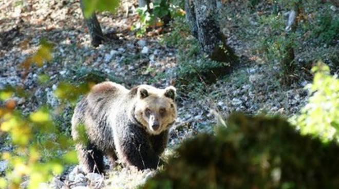 Turismo, più risorse umane per l'Abruzzo