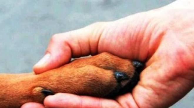 Cani uccisi a fucilate nella provincia dell'Aquila