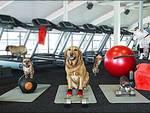 Fitness per cani: ecco l'ultima tendenza d'oltreoceano